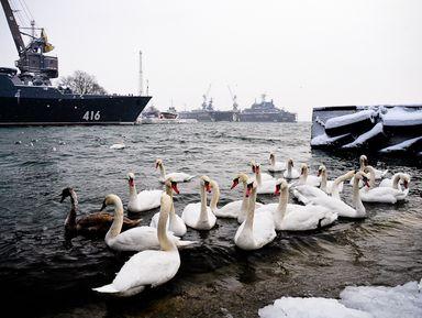 Экскурсия по самым западным городам России — Балтийск, Янтарный, Донское