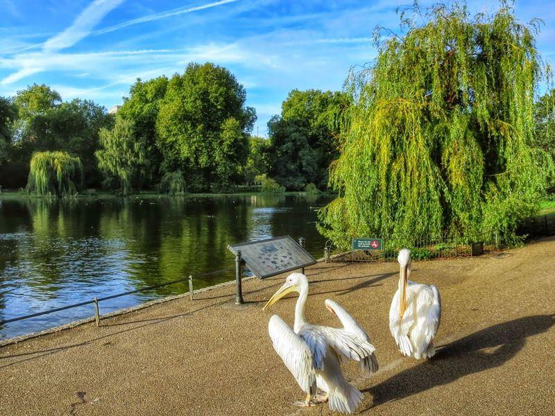 Фото Все самое важное в Лондоне за 2,5 часа
