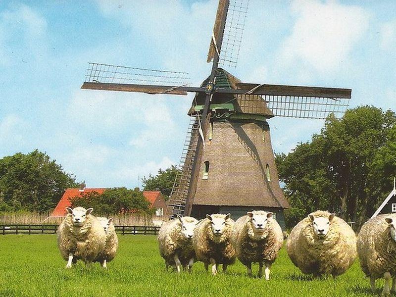 Экскурсия Из Амстердама по фермам и рыбацким деревням