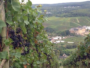 Пивной, винный и гастрономический туры в регионе Рейнской земли