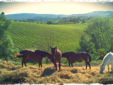 Из Флоренции в Тоскану на Кьянти Тур