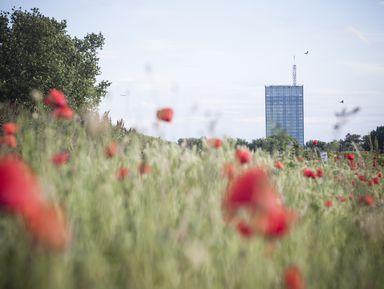 Белград — город на границе двух культур